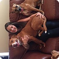 Adopt A Pet :: Evie - Marietta, GA