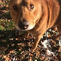Adopt A Pet :: Teddy - Poughkeepsie, NY