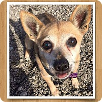 Adopt A Pet :: Buster ~ Adoption Pending - Youngstown, OH