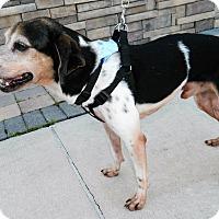 Adopt A Pet :: Bandit - Umatilla, FL