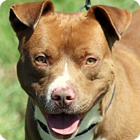 Adopt A Pet :: Orville Reddinbarker - Sparta, TN