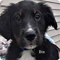 Adopt A Pet :: Bea - Warren, PA