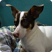 Adopt A Pet :: Addie - Providence, RI