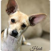 Adopt A Pet :: Heidi - Pascagoula, MS