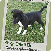 Adopt A Pet :: BARTLEY - Lincoln, NE