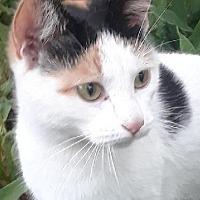 Adopt A Pet :: Mango - Highland, IN
