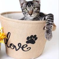 Adopt A Pet :: Coffee - Luling, LA