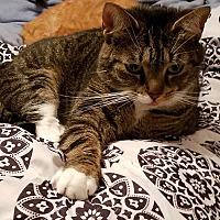Adopt A Pet :: Ruthie - Sykesville, MD