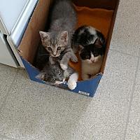 Adopt A Pet :: Alex & Dot - Elyria, OH