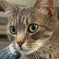Adopt A Pet :: Junior - Sprakers, NY