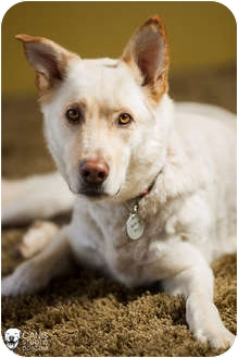 German Shepherd Dog Mix Dog for adoption in Portland, Oregon - Gilroy