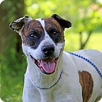 Adopt A Pet :: MOXY - Scottsburg, IN