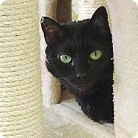 Adopt A Pet :: Violet - Pineville, NC