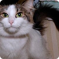 Adopt A Pet :: Jewels - Medina, OH