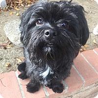 Adopt A Pet :: COLE - Mission Viejo, CA