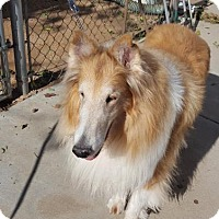 Adopt A Pet :: Tucker - Riverside, CA