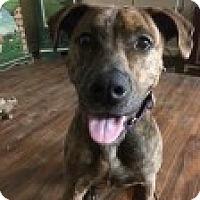 Adopt A Pet :: Jen Welter - Savannah, GA