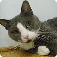 Adopt A Pet :: Addis - Hamburg, NY
