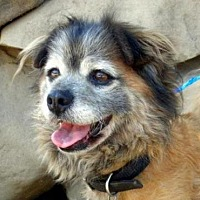 Adopt A Pet :: Bear - Fillmore, CA