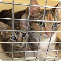 Adopt A Pet :: Leila - Trexlertown, PA
