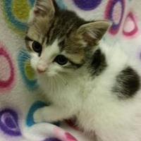 Adopt A Pet :: Gizmo - Benton, KY