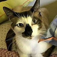 Adopt A Pet :: Horatio - Davis, CA