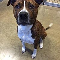 Adopt A Pet :: Phil - Jackson, MI