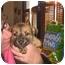 Photo 2 - Australian Cattle Dog/Shepherd (Unknown Type) Mix Puppy for adoption in Buffalo, New York - Bashful: PENDING