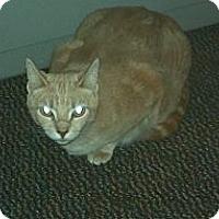 Adopt A Pet :: Pebbles - Saint Albans, WV