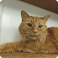Adopt A Pet :: Simba - Princeton, WV