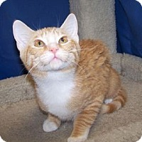 Adopt A Pet :: K-Maddie3-Scarlet - Colorado Springs, CO