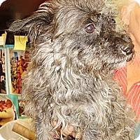 Adopt A Pet :: Tiny Mel - Chicago, IL