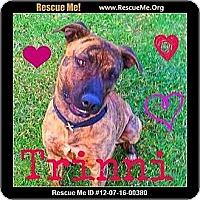 Adopt A Pet :: Trinni - Scottsdale, AZ