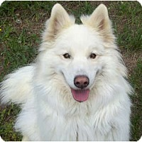 Adopt A Pet :: Tico - Arvada, CO