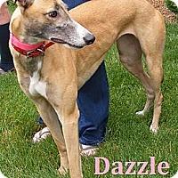Adopt A Pet :: Dazzle - Fremont, OH
