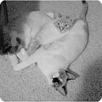 Adopt A Pet :: Marley and Mocha - Mesa, AZ