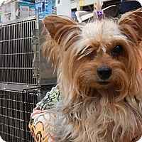 Adopt A Pet :: Kamile - Tucson, AZ
