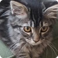 Adopt A Pet :: Jessa - Davis, CA
