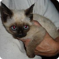 Adopt A Pet :: Gael - Dallas, TX