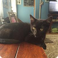 Adopt A Pet :: Bubbles - Jackson, NJ
