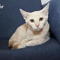 Adopt A Pet :: Laguna - Manhattan, KS