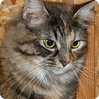 Adopt A Pet :: Della Reese - Stafford, VA