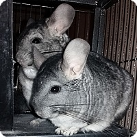 Adopt A Pet :: Gunner & Ammo - Granby, CT