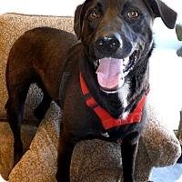 Adopt A Pet :: Keith-pending adoption - Manchester, CT