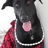 Adopt A Pet :: JoJo - Cuero, TX