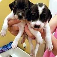 Adopt A Pet :: Sally Smidge and Lulu - Westwood, NJ
