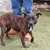 Pit Bull Terrier Mix Dog for adoption in Greensboro, North Carolina - Fiona