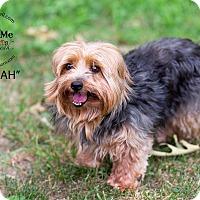 Adopt A Pet :: Hannah - Mount Gretna, PA