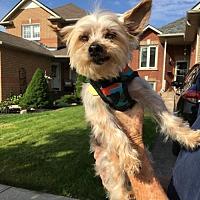 Adopt A Pet :: Pookie 3261 - Toronto, ON