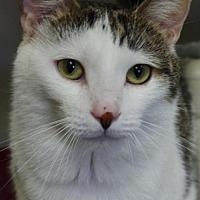 Adopt A Pet :: Felix - Nashville, IN